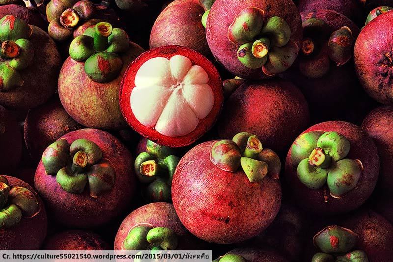 mangoteen, มังคุด, ผลไม้ไทย